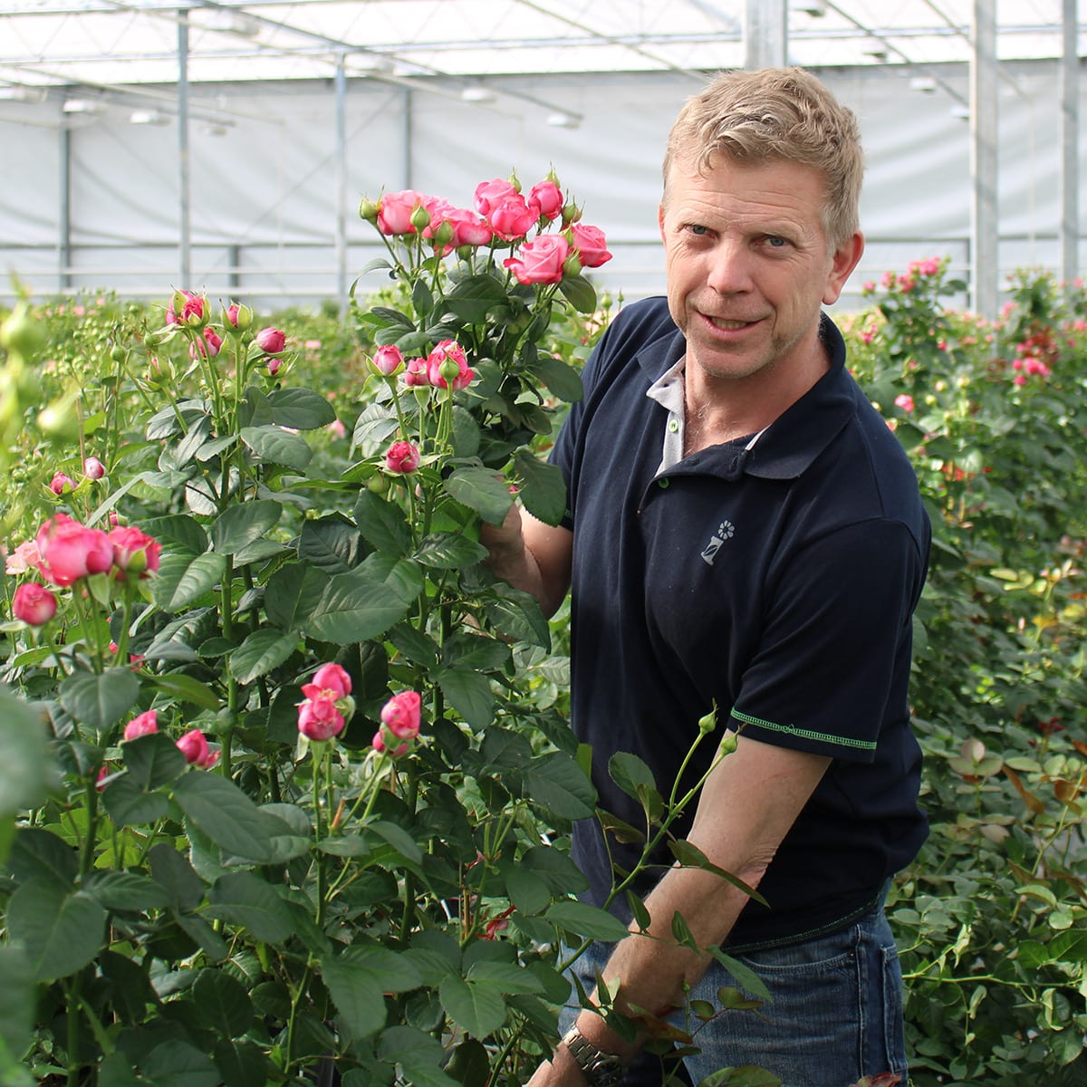 Rooscadeau en rozenkwekerij Van Seters BV. Eigenaar Gertjan van Segers is al ruim 40 jaar erkend rozenkweker.